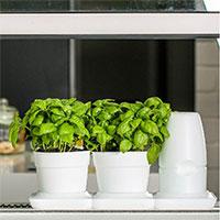 Minigarden Basic Pots kryddodling i automatbevattning