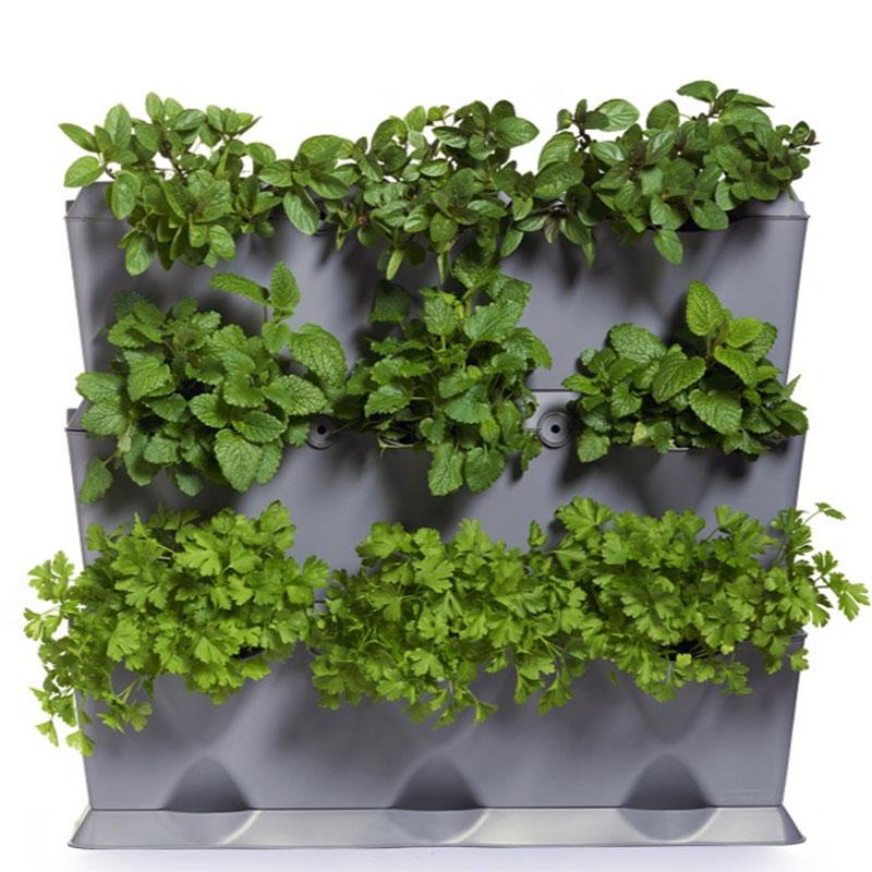 Grå växtvägg planterad med kryddväxter inomhus