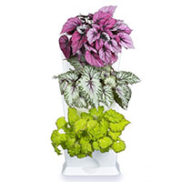 Vertikalodling av krukväxter i Minigarden One
