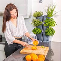 Kryddodling inomhus i köket i Minigarden Corner