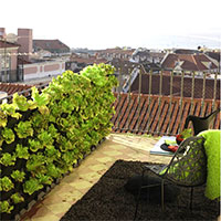 Sallatsodling på balkongen i vertikaodlingssystem Minigarden