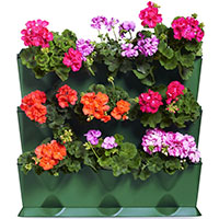 Pelargonodling i växtvägg Minigarden Vertical