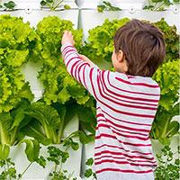 Grönsaksskörd i väggodlingssystem Kitchen Garden