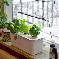 Fönsterodling i hydrokultur med Harvy odlingsstation