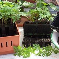 Miniväxthus med underbevattning och pluggar för fröer