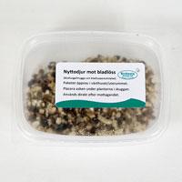 Förpackning med nyttodjur mot bladlöss