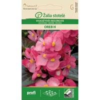 Fröer till Begonia 'Oreb H'