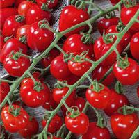 Fröer till Tomat, Solanum lycopersicum L. 'Gardenberry' F1