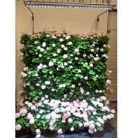 Led SPOT-120 extraljus för växter