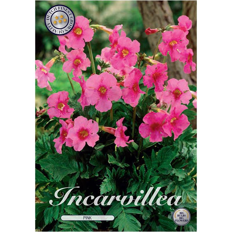 Rosenincarvillea 'Pink'
