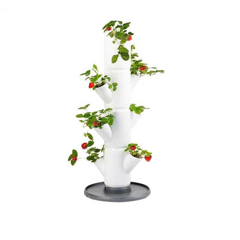 Jordgubbskruka Sissi Strawberry, vit
