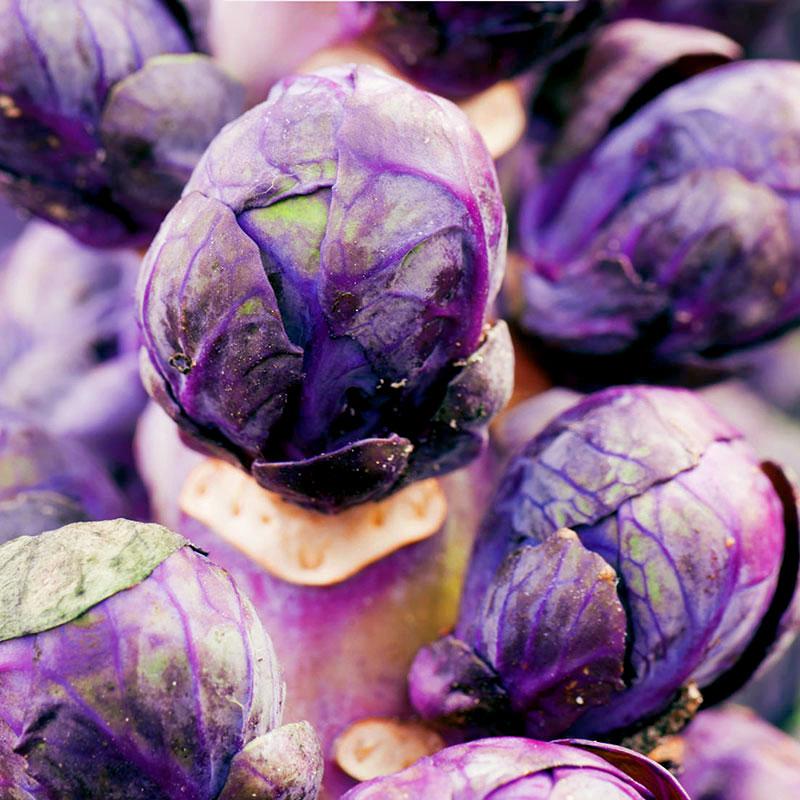 Frö till Brysselkål, Brassica oleracea 'Red Bull'