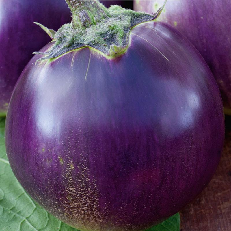 Aubergin, Solanum melongena 'Beatrice & Barbarea' F1 Mix