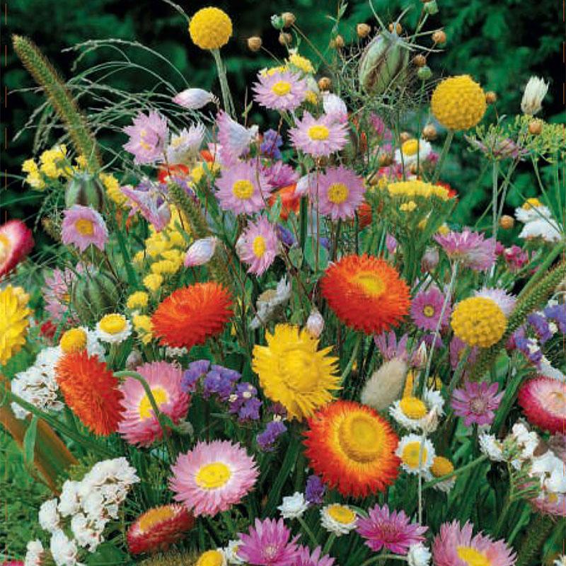 Frö till Blomstermix 'Everlasting'
