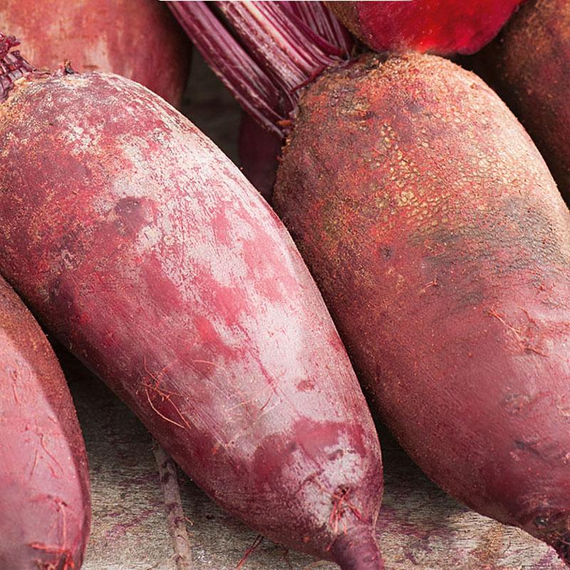 Frö till Rödbeta, Beta vulgaris 'Monorubra'