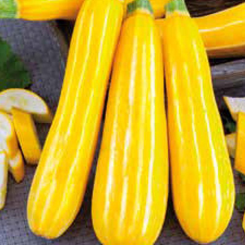 Frö till Squash 'Sunstripe'