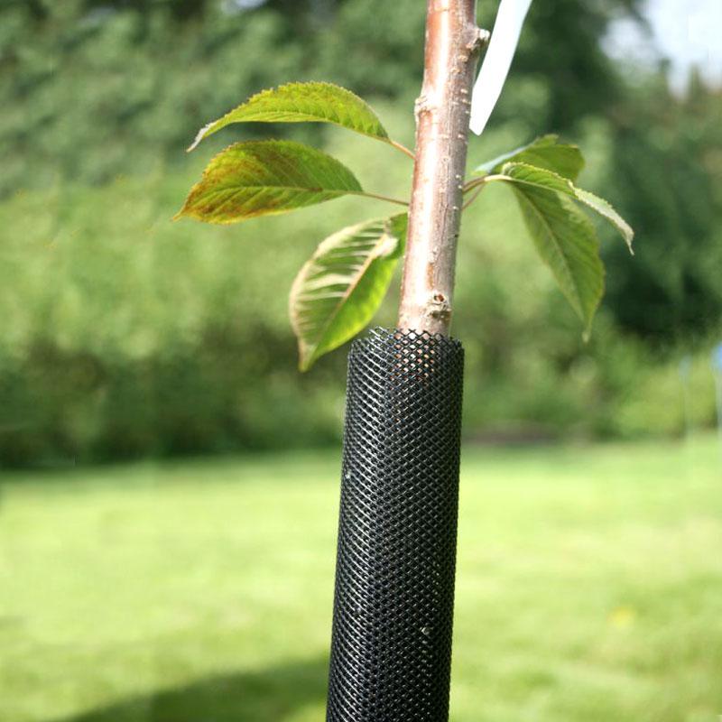 Stamskydd för unga träd mot gnagare