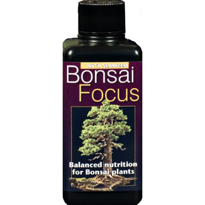 Bonsainäring - Bonsai Focus, 1...-
