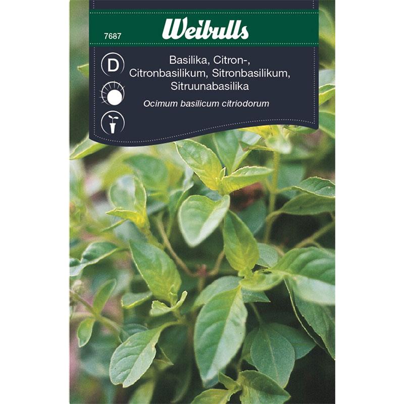 Frö till citronbasilika, Ocimum basilicum citriodorum