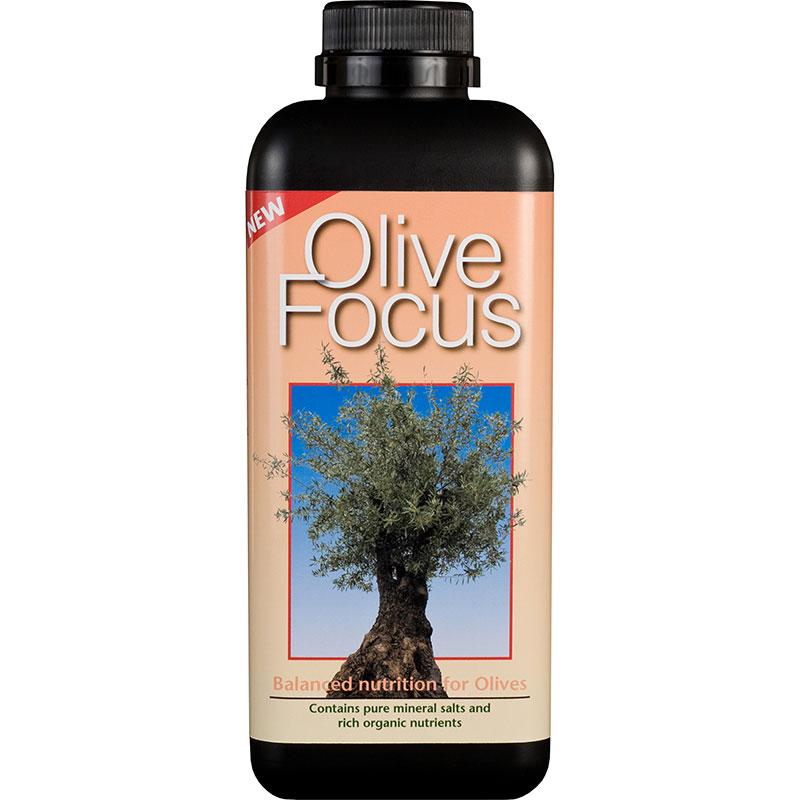 Olivnäring - Olive Focus, 1L-Olivnäring - gödning för olivträd i kruka