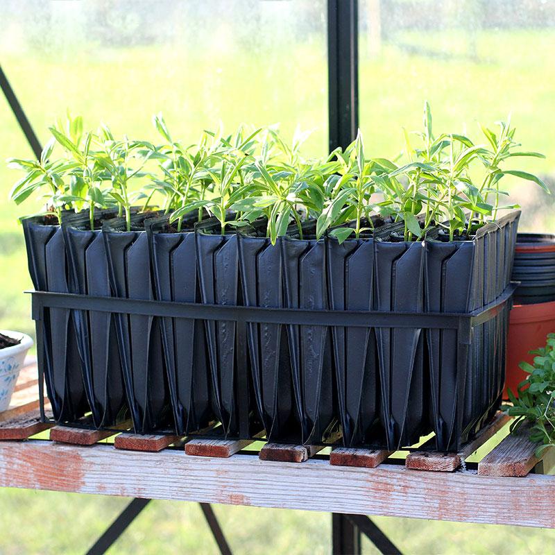 Maxi Rootrainers pluggar för odling av träd och växter
