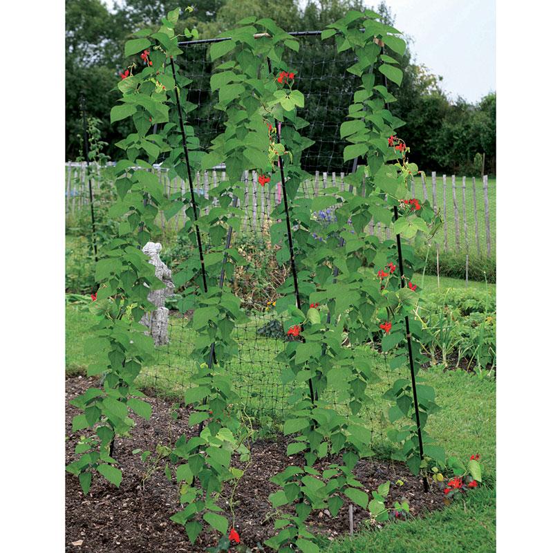 Växtstöd för baljväxter, bönor