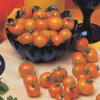 Frö till tomat Sungold