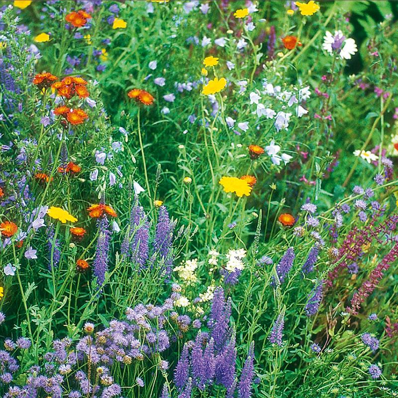 Frö till blomsterängsmix för soliga lägen