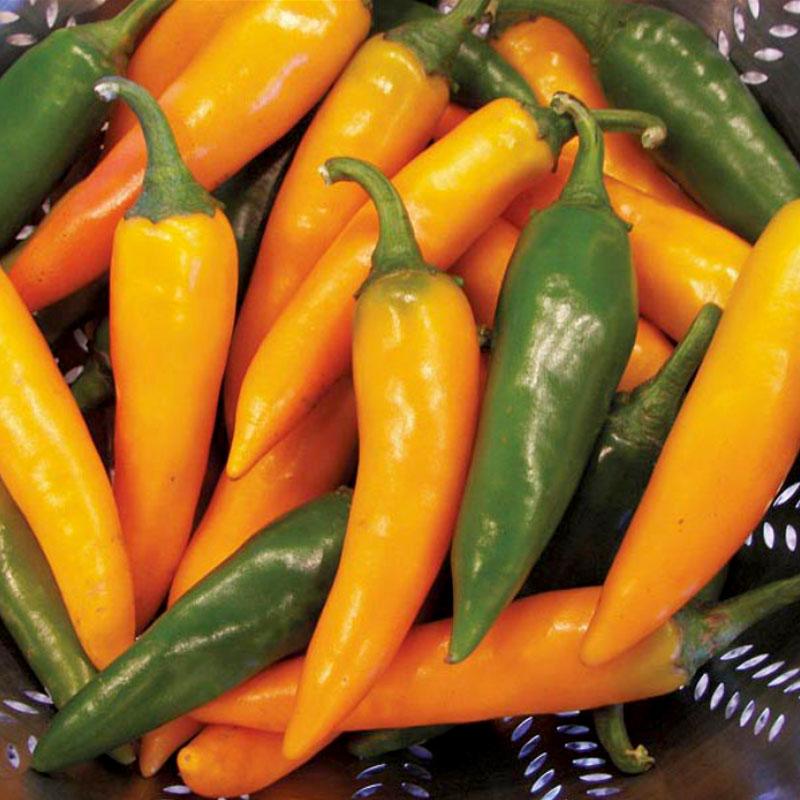 Frö till chilipeppar Bulgarian Carrot
