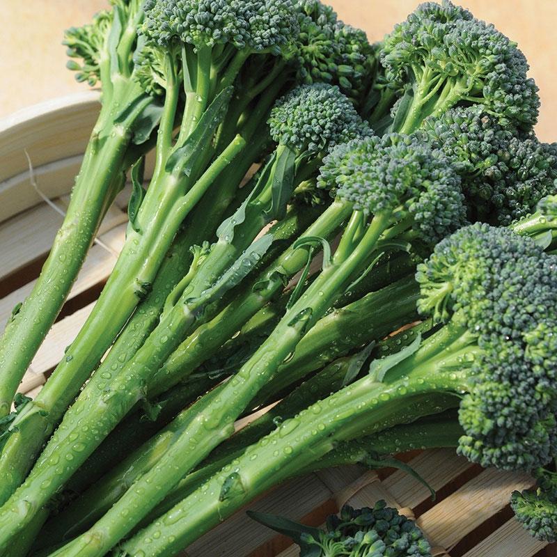 Frö till Broccoli 'Inspiration' F1, Brassica oleracea