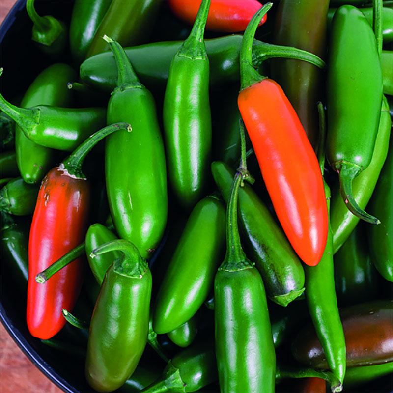 Frö till Chilipeppar 'Mild Jalapeño', Capsicum annuum