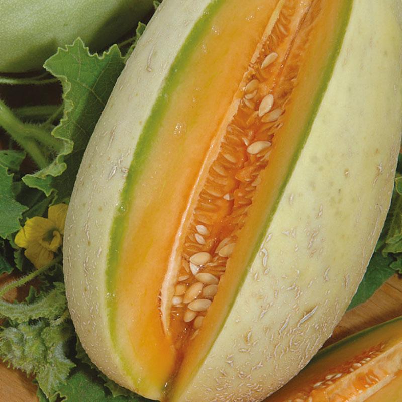 Frö till Melon 'Melba', Cucumis melo