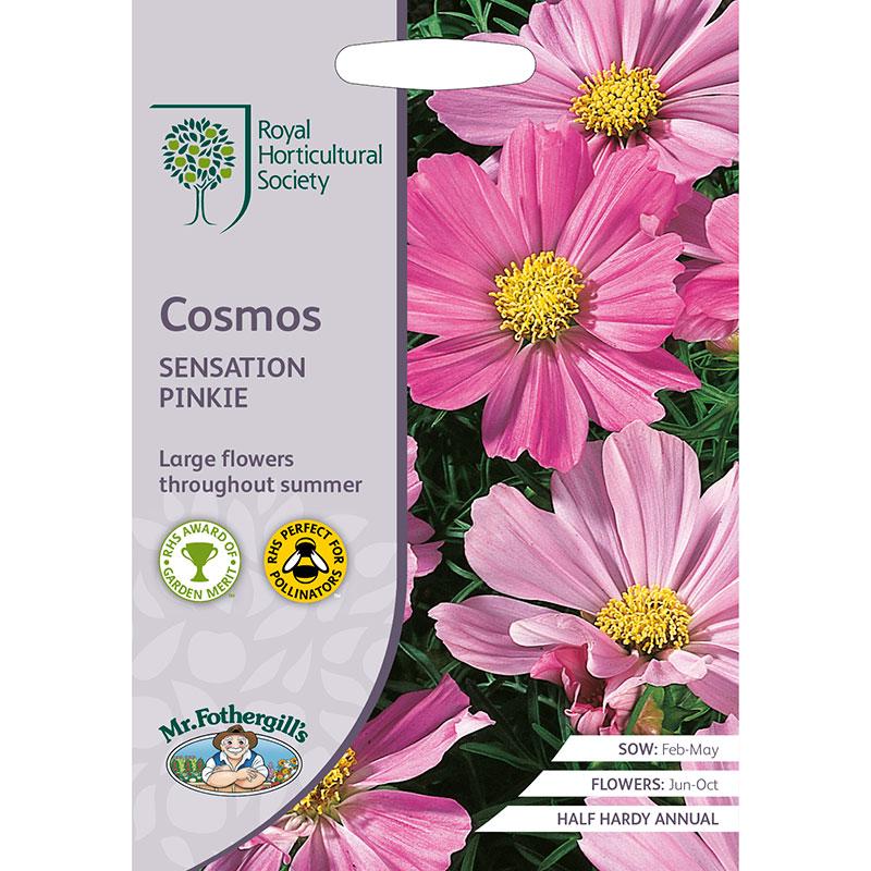 Frö till Rosenskära 'Sensation Pinkie', Cosmos bipinnatus