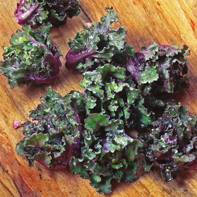 Frö till Rosettkål Mix F1, Brassica oleracea
