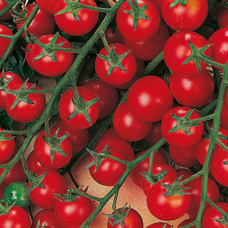 Frö till tomat 'Sweet Million' F1