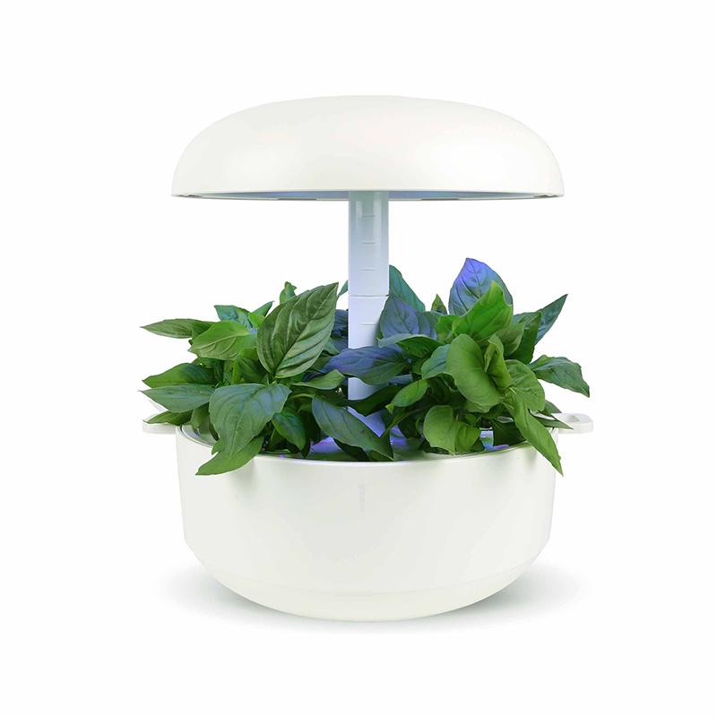 Frökapsel till Smart Garden inomhusodling - Ocimum basilicum - Thai