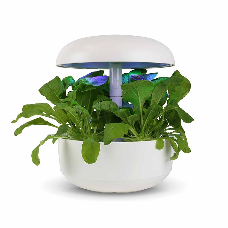 Frökapsel till Smart Garden inomhusodling - Brassica rapa var. perviridis