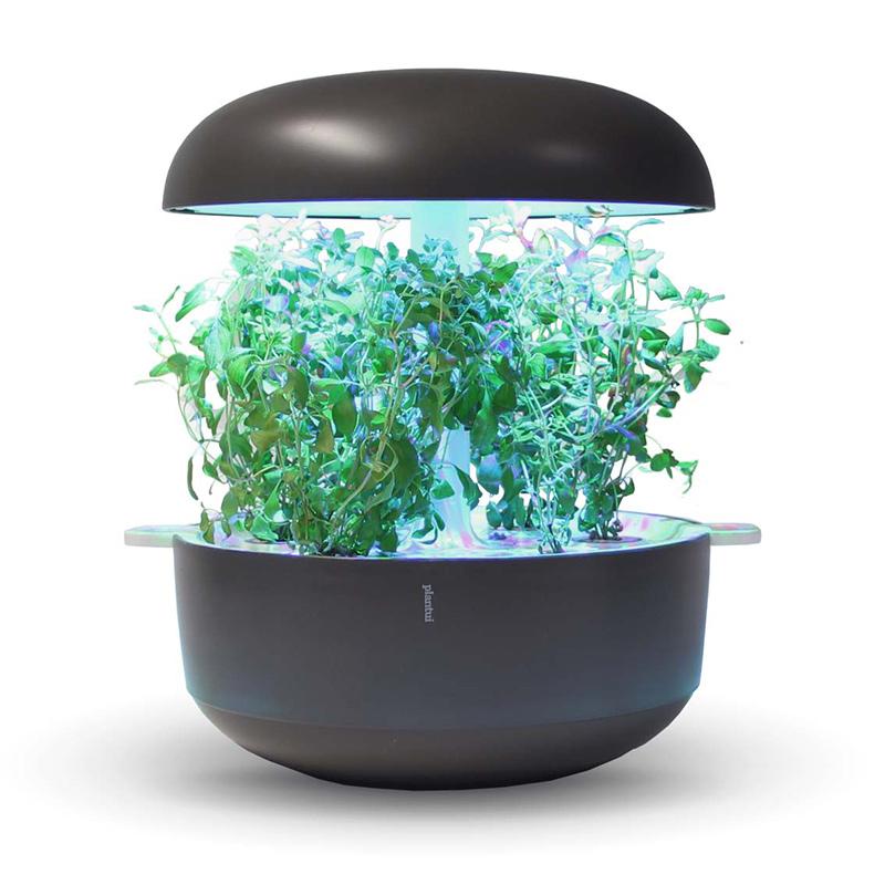 Frökapsel till Smart Garden inomhusodling - Origanum majorana