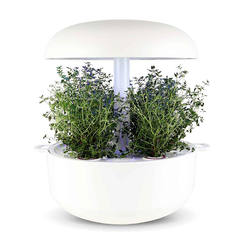 Frökapsel till Smart Garden inomhusodling - Thymus vulgaris