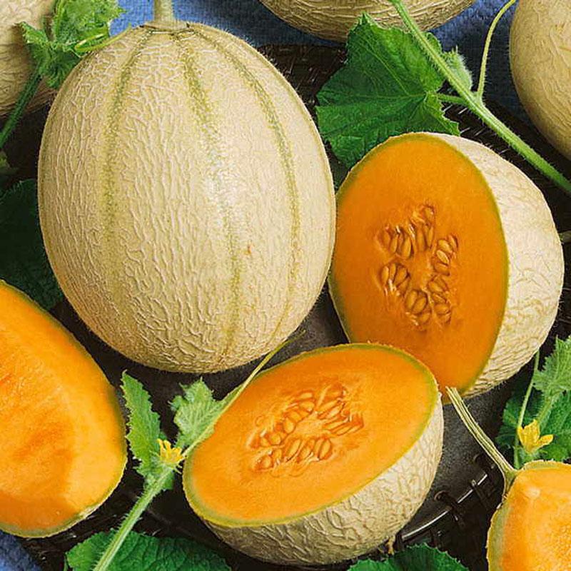 Frö till natmelon 'Ambrosia'