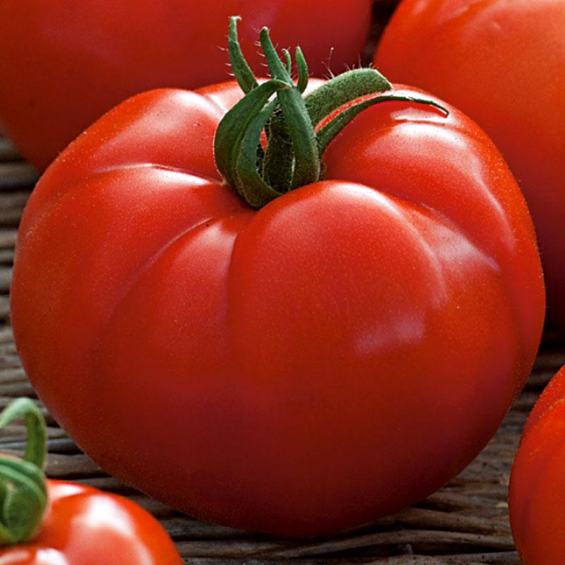 Tomat Beefsteak