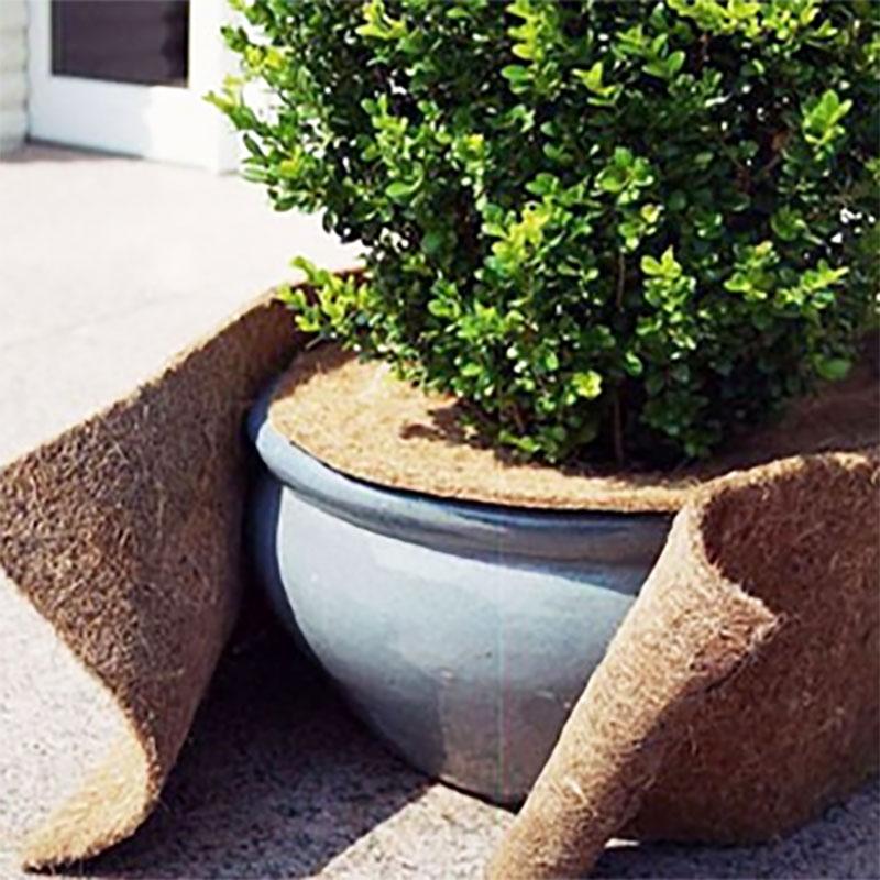 Kokosmatta för vinterskydd av växter