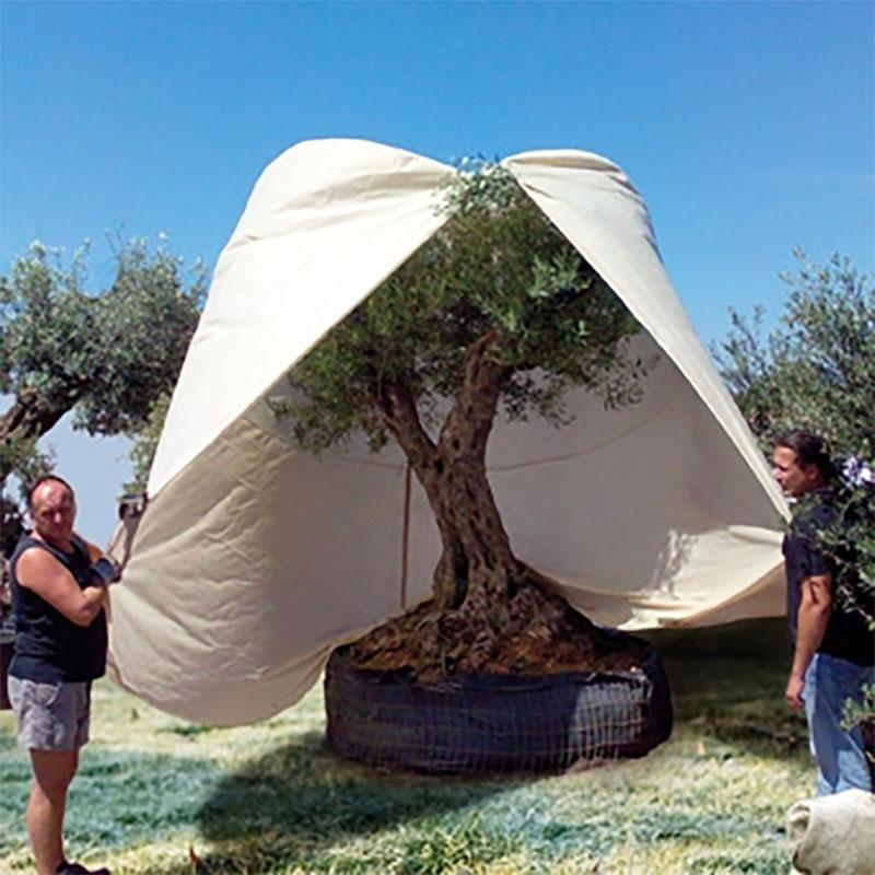 Vinterskydd XXXL Mediterranean