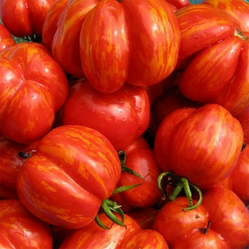 Tomat 'Striped Cavern'