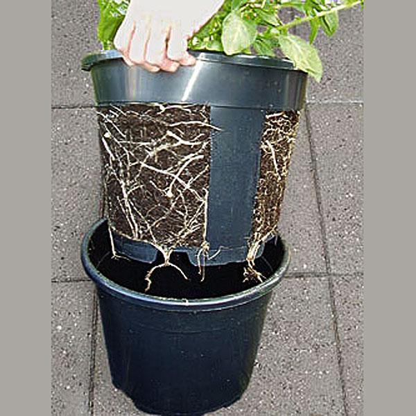 potatishink - odla potatis i hink