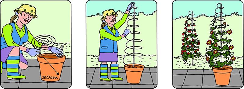 Beskrivning för utdragbart växtstöd Twister