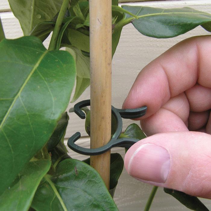 Plantclips-Plantclips för att fästa växt mot ett stöd