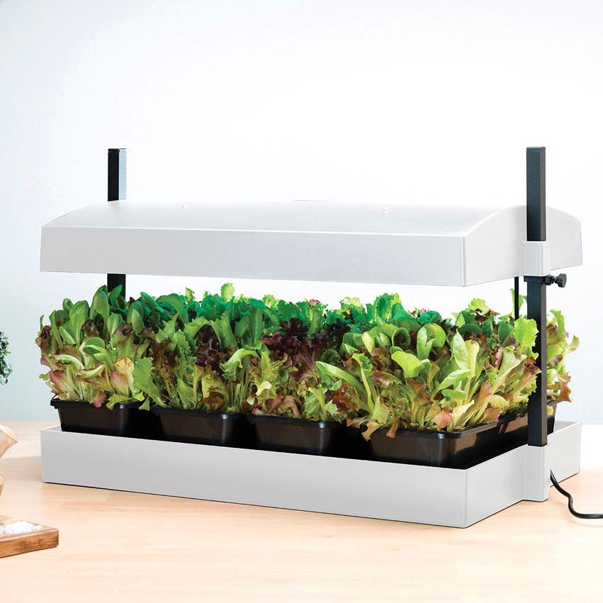 Odlingsstation med bevattningsbricka, vit-Odlingssystem för inomhus odling - Growligth garden