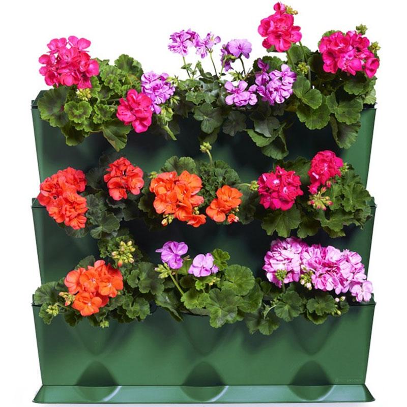 Växtvägg med pelargoner i Minigarden Vertical