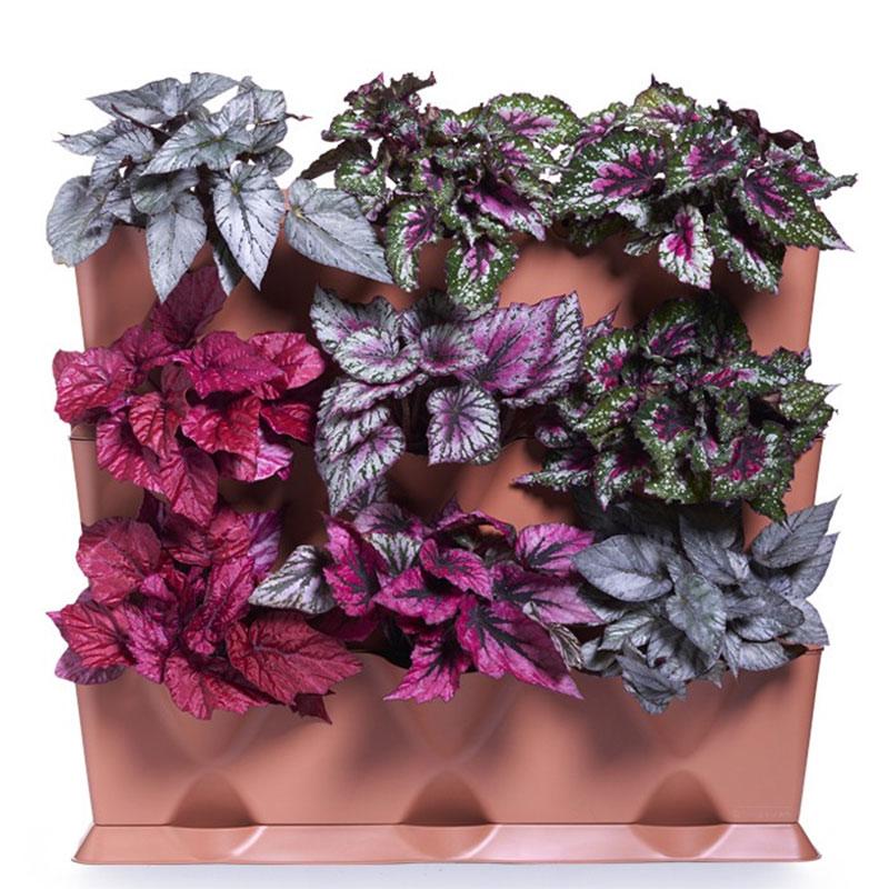 Minigarden Vertical växtvägg med bladbegonia